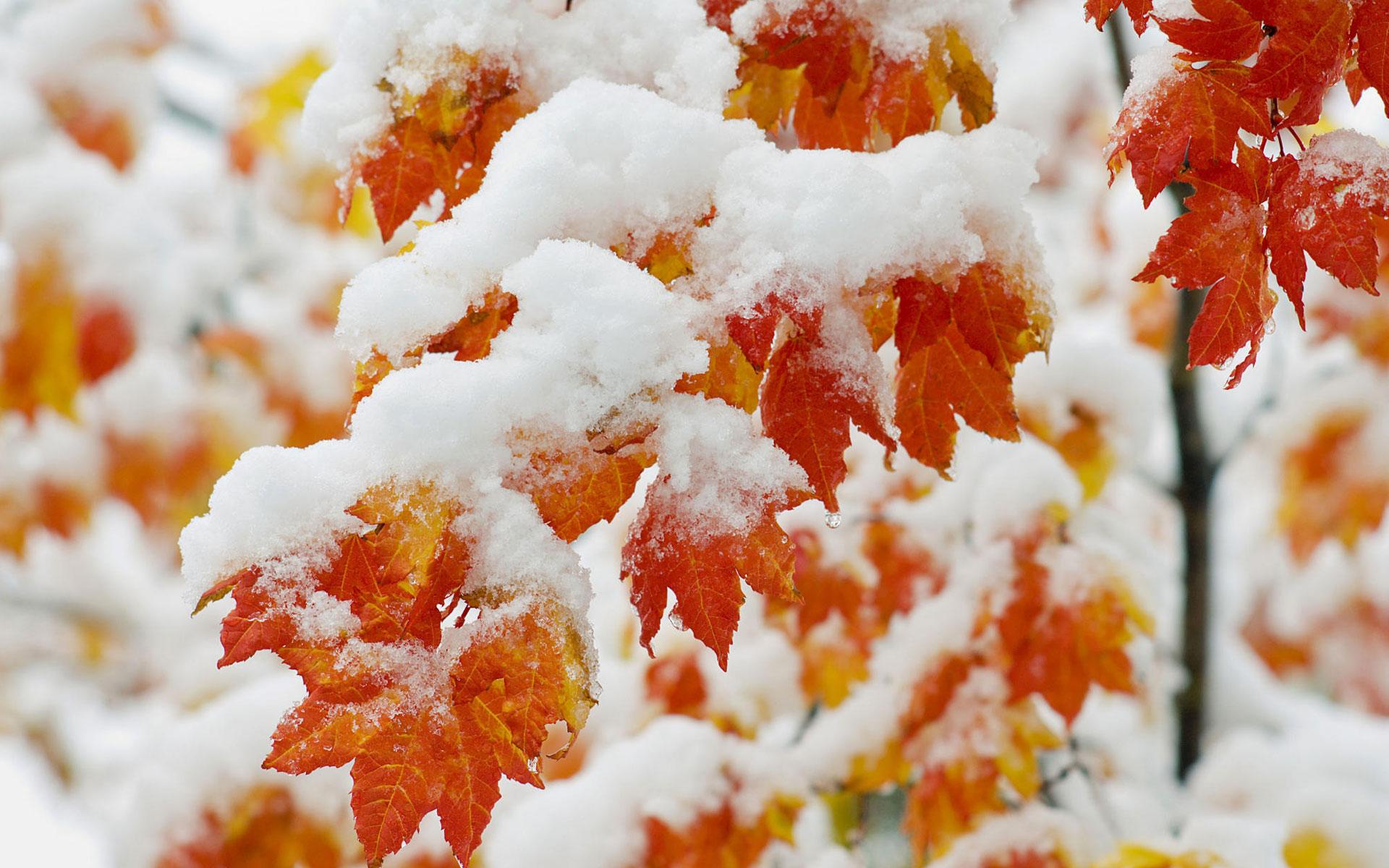 earth-seasons-fall-75385