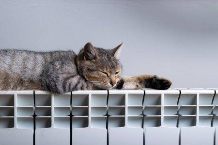 depositphotos_247534866-stock-photo-a-tiger-cat-relaxing-on