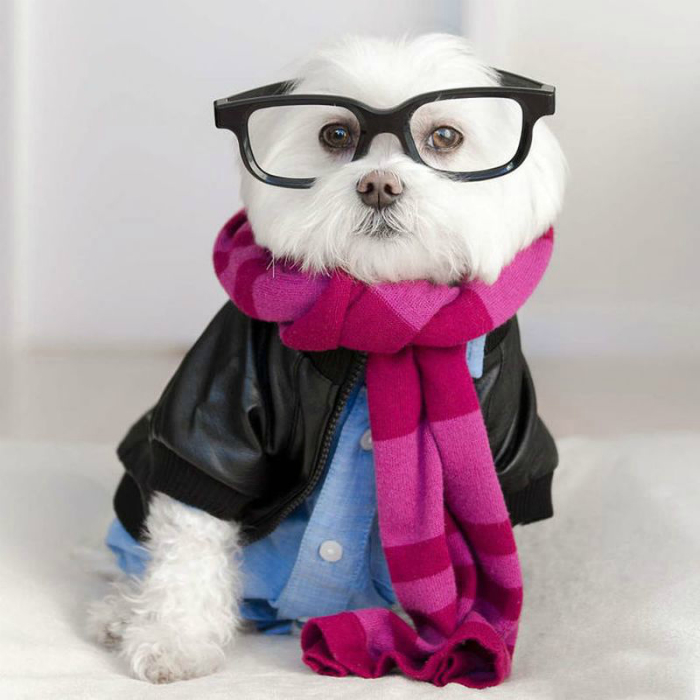 1456420850_toby_the_hipster_dog-9
