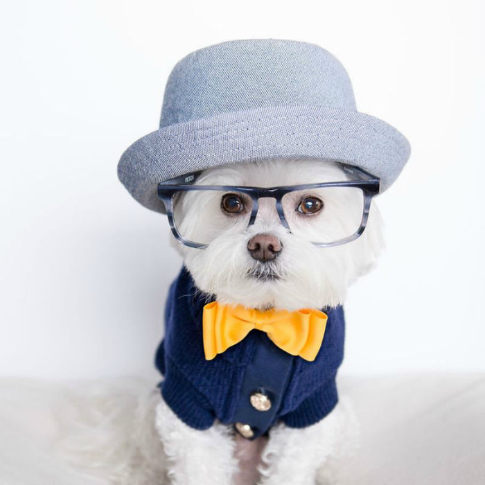 Toby_the_hipster_dog-12