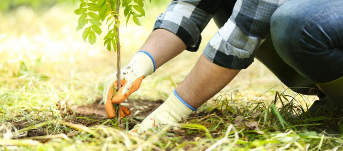 tree-planting-in-autumn